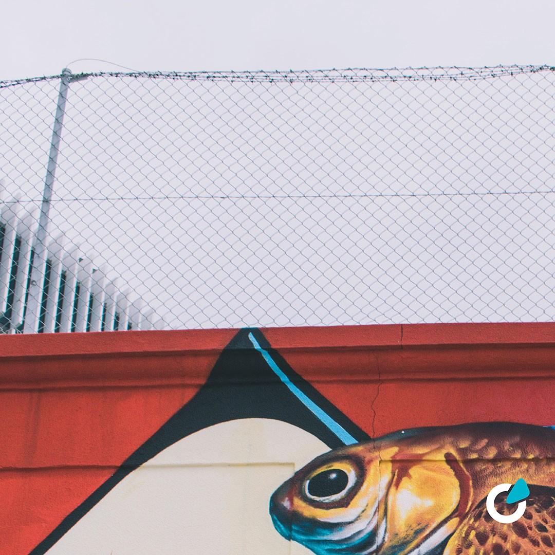 Professionelle Fahrzeugfolierung Teil- oder Vollfolierung von SCEND Tuning Inspiration von Street Arts Graffiti Fisch mit Flügeln